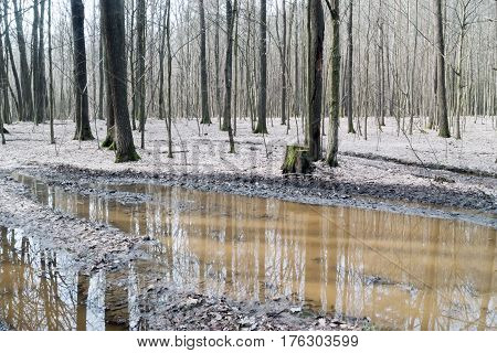 Deciduous forest and water in early spring