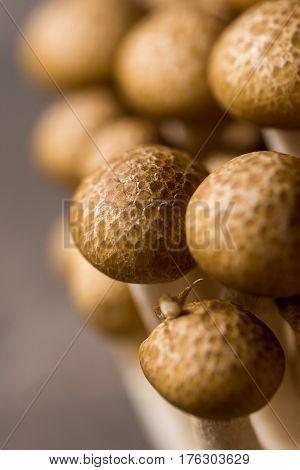 Brown Shimeji Mushrooms as Fungi Food Background