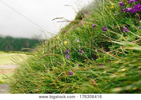 Mountain flowers and grass close up in Mtskheta-Mtianeti Kazbegi Georgia. Herbal nature with wild flowers and fog background