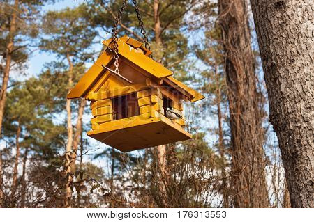 Birdhouse in the woods. Food for small birds