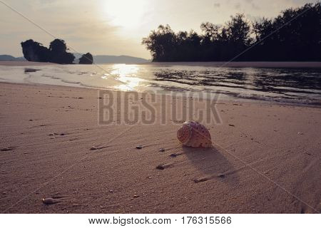 Pink shell lies on the sandy beach