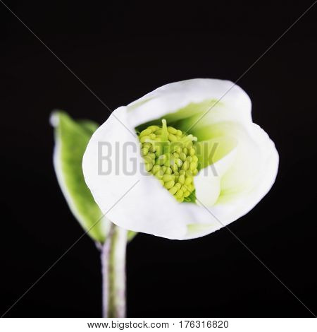 White Flower In Close Up