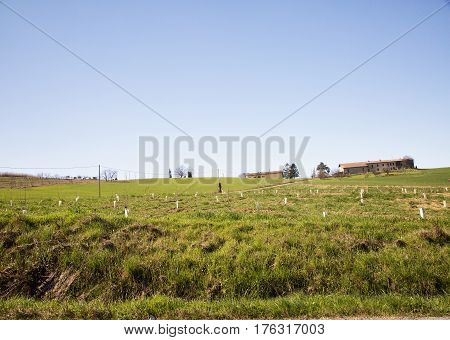 Young Trees Planted In A Field