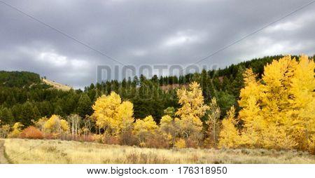 Fall Hike in Corbly Gulch Bozeman Montana