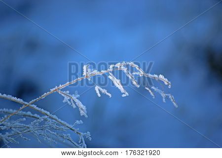 Ice crystals on a frond of grass