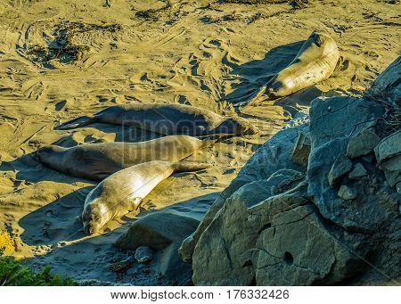 Pacific Ocean Coast sea lion California road number 1