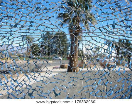 Looking at a palm tree through a shattered pane of safety glass that has a multitude of cracks radiating from a central point of impact.