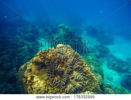 Big coral reef underwater photo. Deep blue sea view with bottom relief. Marine life with animals and plants. Undersea scene of tranquil and beautiful tropical lagoon. Snorkeling in exotic seashore
