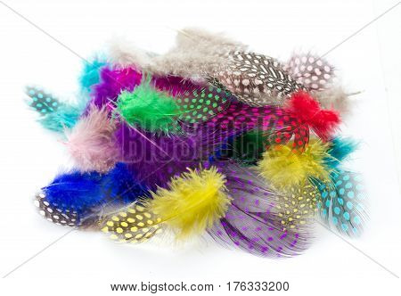 Colorful bird feather isolated on white background
