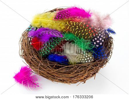 Colorful bird feather in nest isolated on white background