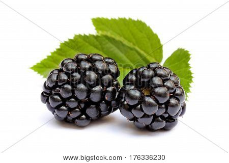 Two blackberries close up isolated on a white background