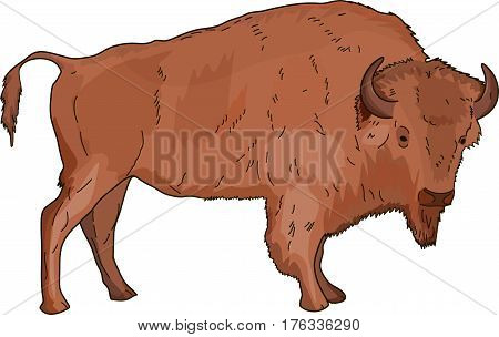 The brown big buffalo on a white background.