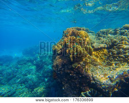 Big coral reef underwater photo. Aqua blue sea view with sea bottom relief. Marine life with animals and plant. Undersea scene of tranquil and beautiful tropical lagoon. Snorkeling in exotic seashore