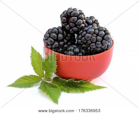 Blackberries with leaves in a bowl isolated on white background