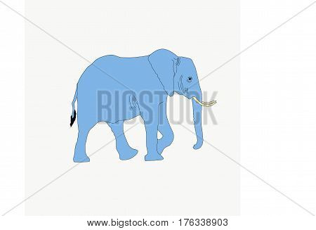 Portrait of an elephant in etosha national park, hand drawn vector illustration isolated on white background
