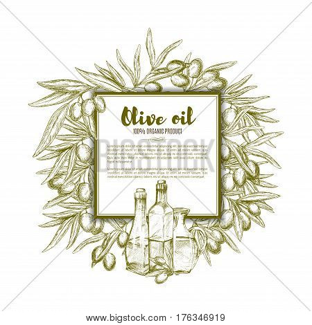 Olive oil poster of vector sketch olive-tree branches and green or black olives fruits, extra virgin oil bottles, glass pitchers or jugs. Frame design for organic products farm market or store