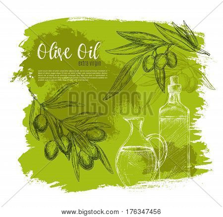 Olive oil sketch vector poster of green olives and branch with oil bottle and jug. Design of olives fruits bunch for vegetarian food salad flavoring ingredient or seasoning product package