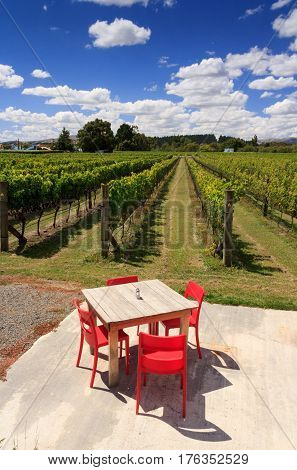 Winery green field with grapes. Location: New Zealand
