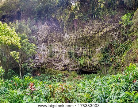 Fern Grotto at the Wailua State Park Kauai Hawaii