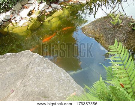 Pond with fishes in the Japanese garden located in Montevideo, Uruguay.