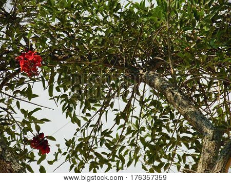 A tree with flowers with sky background