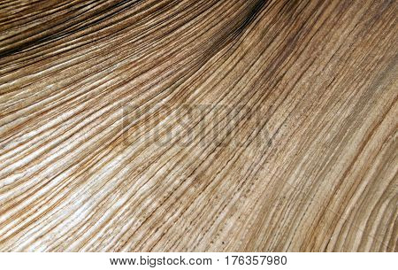 Closeup photo of Tree bark texture background