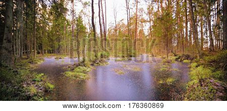Panoramic landscape with frozen water in a marshy forest