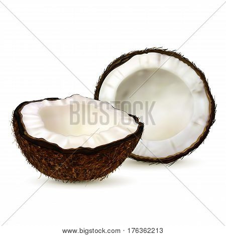 Realistic coconut two halves of coco on white background. Vector.