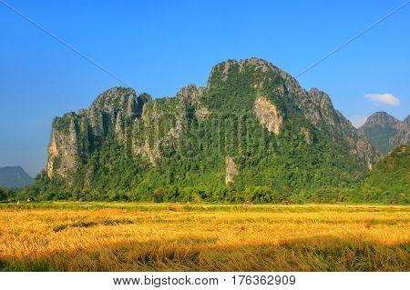 Harvested Rice Field Surrounded By Rock Formations In Vang Vieng, Vientiane Province, Laos