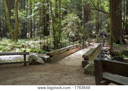Bridge In Muir Woods