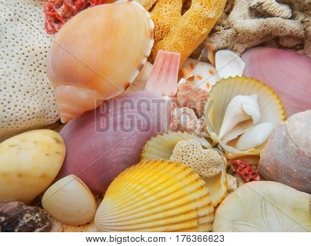 Seashells And Dead Hard Coral On A Beach