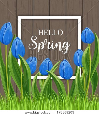 Hello spring banner with blue blooming tulip flower on wooden background vector illustration. Floral decorated spring design for holiday, seasonal celebration, nature feast congratulation template poster