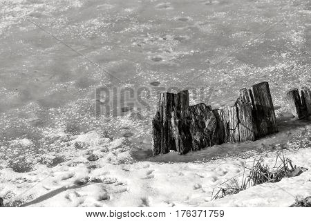 rotten and mouldering stubs from wooden stubs and the bed of the river under snow monochrome tone