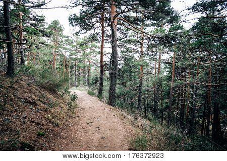 Footpath Passing Through In Forest. Navacerrada Madrid Spain