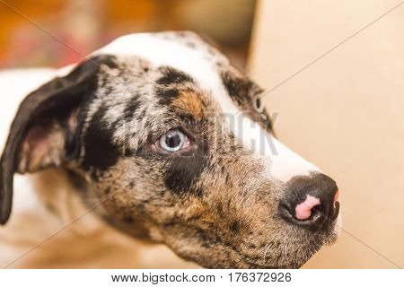 Mixed-breed Puppy Dog With Bright Blue Eyes