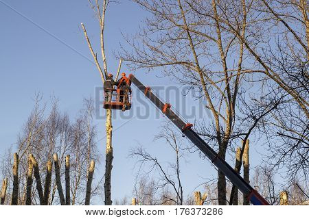 work on the aerial platform, two workers cut tree branches