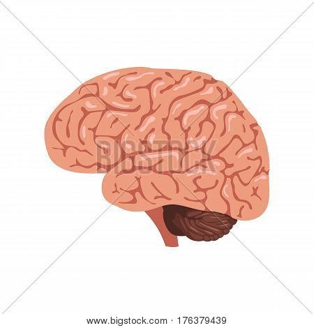 Brain anatomy icon. Human internal organs symbol. Vector illustration in cartoon style isolated on white background