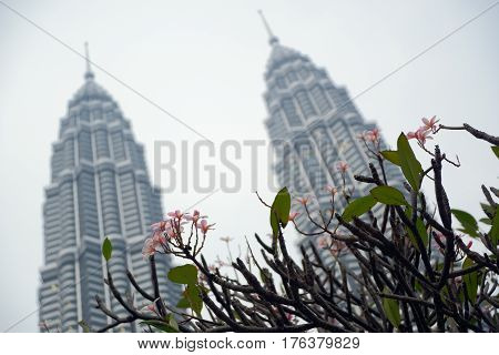 Kuala Lumpur Malaysia - November 5 2014: Flowering bush on a background of Petronas Twin Towers the main attractions of Kuala Lumpur. This is the highest twin towers in the world.