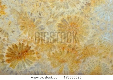 Stone Colorful Texture As Background