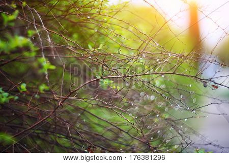 twinkling lights vivid color blurred bokeh spring from leaf background. Abstract nature and soft tone color style.