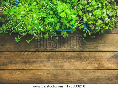 Homegrown radish kress, water kress and coriander sprouts in blue plastic pots on rustic wooden tray background, top view, copy space