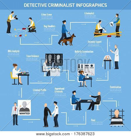 Infographics with information about work of police experts and forensic laboratory arrested criminals flat style vector illustration