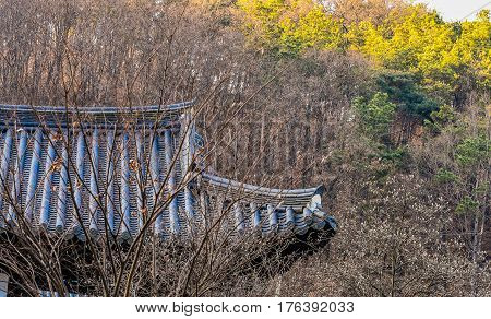 Oriental style tiled roof hidden in a forest of barren trees with a line of evergreen trees bathed in sunlight