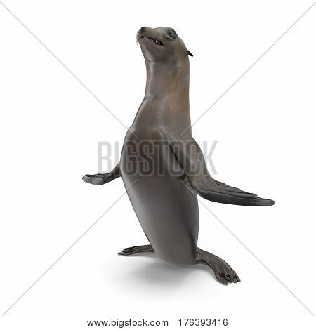 Sea Lion Standing on white background. 3D illustration