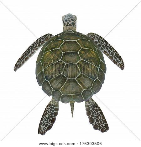 Hawksbill Sea Turtle isolated on white background. 3D illustration