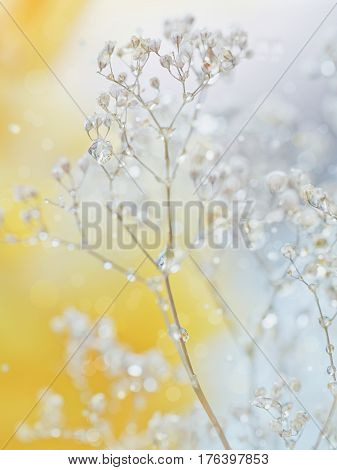 Beautiful abstract blurred soft background with flowers in yellow and grey colors. Macro image of many dew drops or rain water on the dry flower. Elegant and artistic spring background.