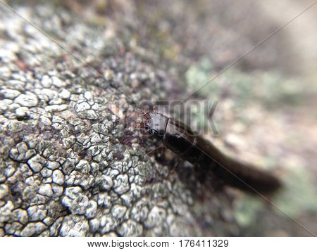 Аrthropod animal on a gray stone in macro.