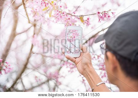 Asian middle aged man in black cap taking photo of sakura flowers or cherry blossom with smart phone. Travel and technology concept. Focus on hand holding cellphone capture pink flowers. Copy space.