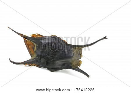 Egg case of a shark or a ray beach at the Atlantic Ocean Brittany France