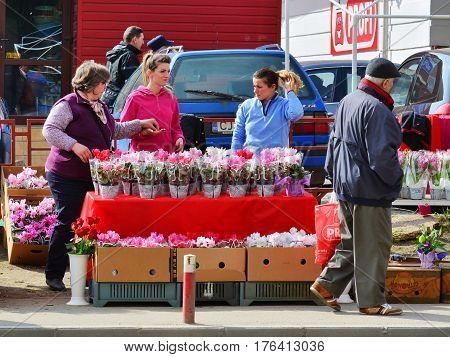 CLUJ-NAPOCA ROMANIA - March 8 2017: Street vendors sell flowers on the sidewalk